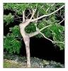 Danzatrice naturale
